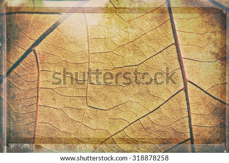 Abstract background - detail of autumn textured leaf - stock photo