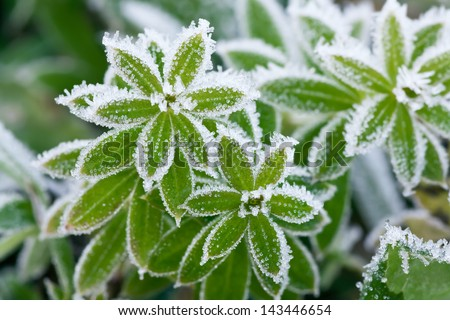 abstract background from a grass covered with hoarfrost - stock photo