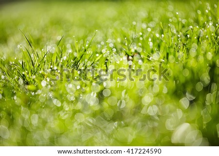 Abstract background from a wet green grass in dew drops