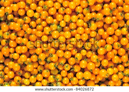 Abstract background from fresh yellow tomatos. A cherry tomato is a smaller garden variety of tomato.