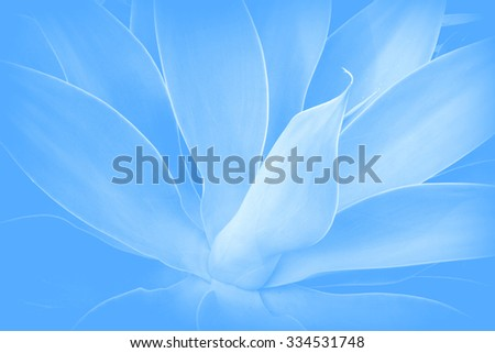 Abstract background in Agave leaves style - stock photo