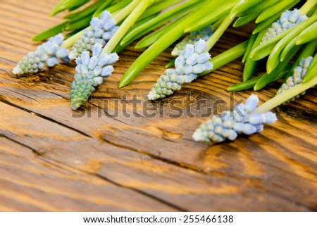 Abstract background made of Blue hyacinths on wooden background - stock photo