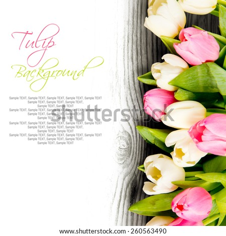 Abstract background made of tulip blooms with white space for text