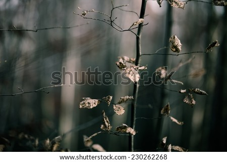 Abstract background: Misty and scary autumn forest, view of tree trunks with dead leaves - stock photo
