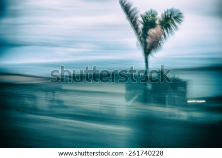 Abstract background motion blur palm leaves in motion during hurricane   Climate catastrophe tropical thunderstorm palm tree on beach during Florida hurricane - stock photo