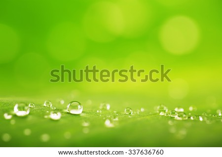 Abstract background of a green leaf texture and water drops - stock photo