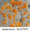Abstract background of alpine lichen on rock at moraine lake area, banff national park, alberta, canada - stock photo