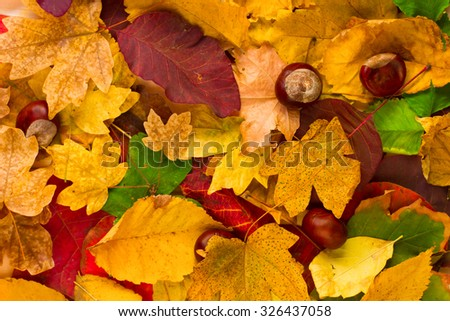 Abstract background of autumn colorful leaves. Autumn background. - stock photo