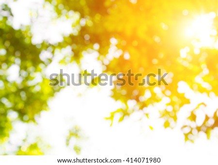 Abstract background of blurred leaves,leaf green pastel tone with sunlight. Nature background. Blur bokeh blur green gradient leaf. Wallpaper of tree blurry top view leaves. - stock photo