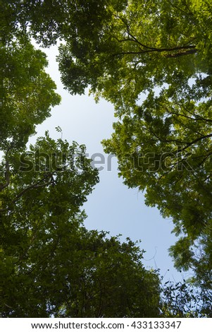 abstract background of canopy tree