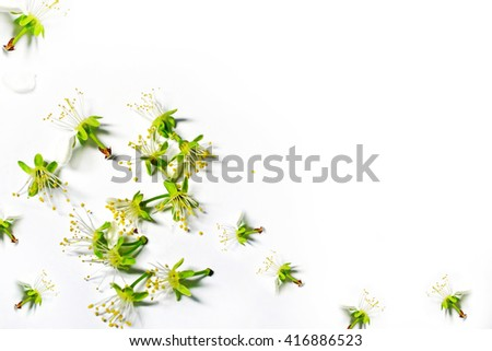 Abstract background of delicate apple petals. Spring.
