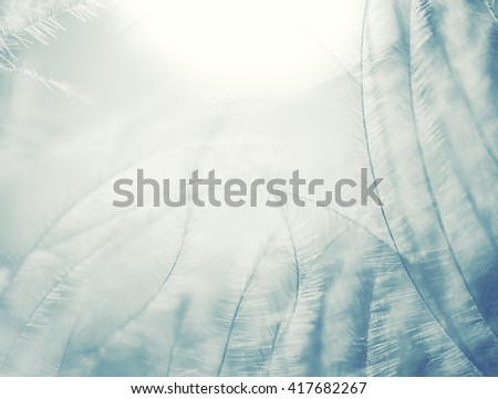 abstract background of downy feather closeup, retro vintage image