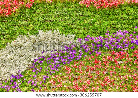 Abstract background of flowers (petunia ). Close-up.