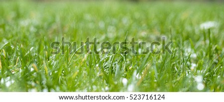 abstract background of green grass and melting snow