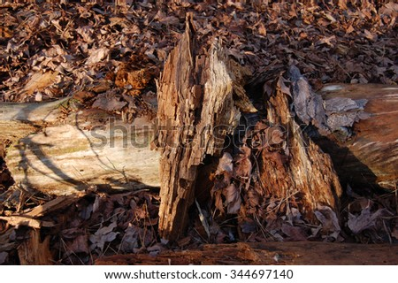 Abstract background of wood and fallen leaves.