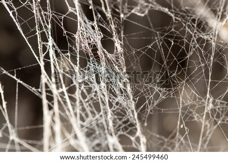 abstract background old spider webs - stock photo