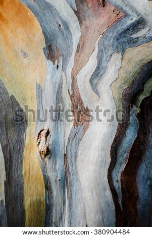 Abstract background pattern of Colorful  Eucalyptus deglupta tree bark