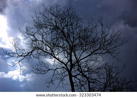 Abstract background silhouette trees and cloudy.