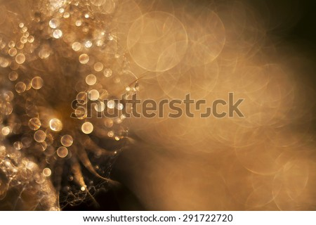 Abstract background - sparkling tiny water drops on a dandelion  - stock photo
