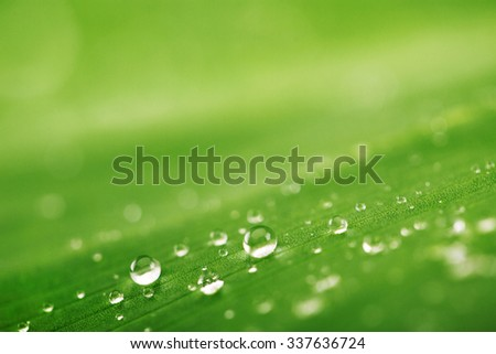 Abstract background . Texture of a green leaf and water drops