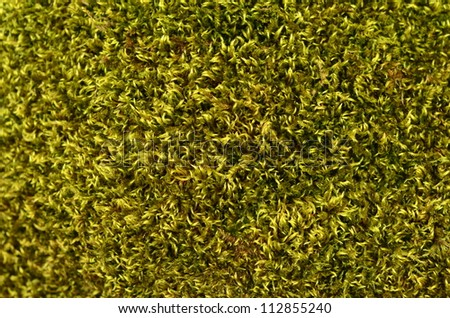 Abstract Background Texture Of Lush Green Moss - stock photo
