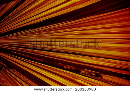 abstract background  Texture of  palm Leaf - stock photo