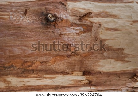 Abstract background texture of tree bark - stock photo