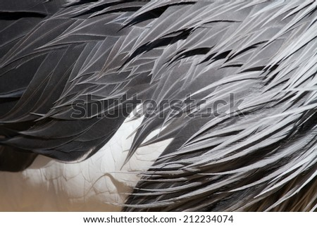 Abstract Background Tropical Bird Crane Feathers