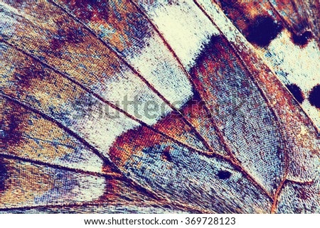 abstract background - wing of butterfly close-up, instagram effect photo