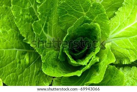 Abstract background with a green salad leaves - stock photo