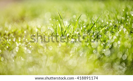 Abstract background with bokeh with a green grass in dew lit with the sun. - stock photo