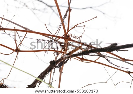 Abstract background with dry deep brown grape vine close up selective focus short depth of field