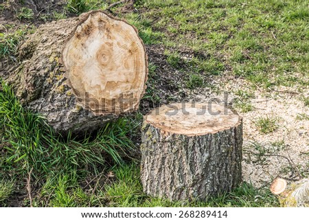 Abstract background with logged and sawed off tree saw dust  Stack with firewood sawn off after winter storm on green grass meadow with copyspace for your text message - stock photo
