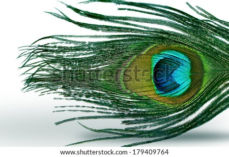 abstract background with peacock feather - stock photo