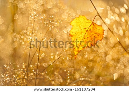 abstract background with the autumn leaf - stock photo