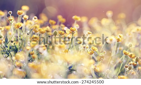 Abstract background with yellow wild flowers buttercups. - stock photo