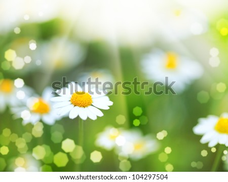 abstract backgrounds with daisy flowers and sun beam - stock photo