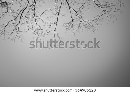 abstract bare trees branches canopy artistic autumn fallen leaves effect background,Tree with grey sky background - stock photo