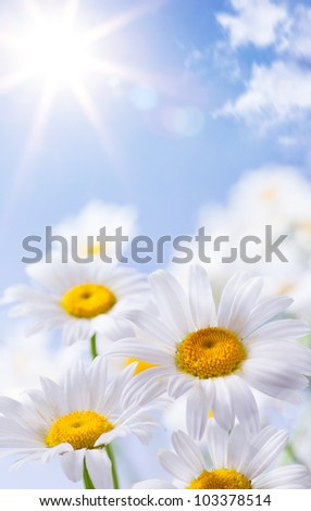 abstract beautiful floral summer background - stock photo