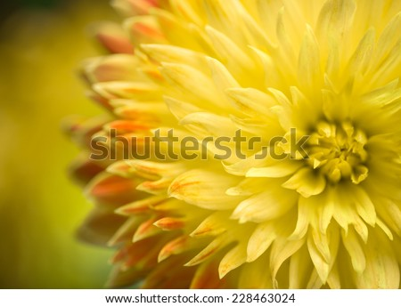 Abstract big flower    - stock photo