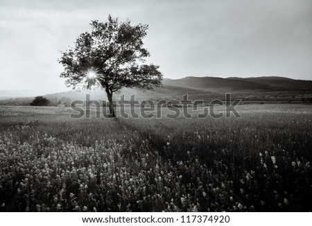 abstract  black and white landscape with lonely tree - stock photo