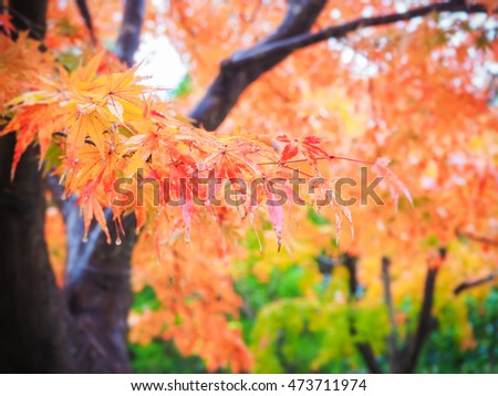 Abstract blur autumn leave background with raindrop in Japan