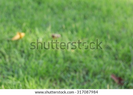 Abstract blur of green grass in the garden - stock photo