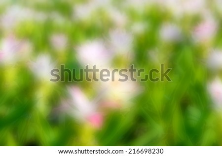abstract blurred flower background, Siam tulip with green leaf - stock photo