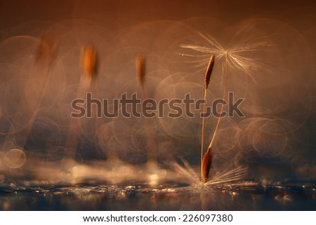 abstract blurred natural background orange dandelion seeds - stock photo