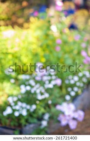 Abstract blurred out of focus background with flower garden - stock photo