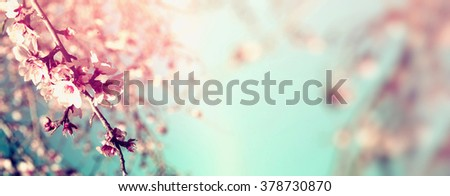 Abstract blurred website banner background of of spring white cherry blossoms tree. selective focus. vintage filtered - stock photo