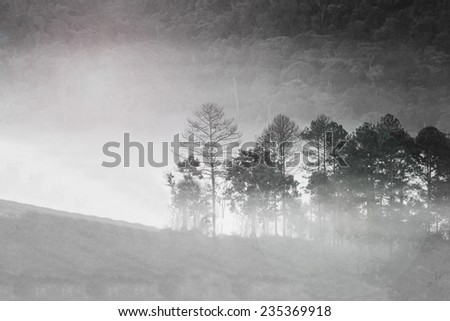 Abstract blurry and soft background of misty forest in morning