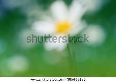 Abstract blurry background green nature with flower