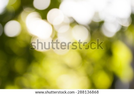 Abstract blurry natural fresh green background with bright round bokeh . Out of focus lights in forest. defocused blurry bokeh background. - stock photo
